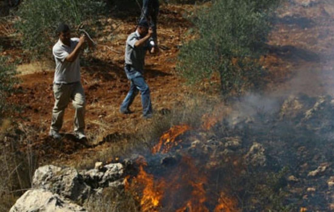 مستوطنون يحرقون اراضي زراعية
