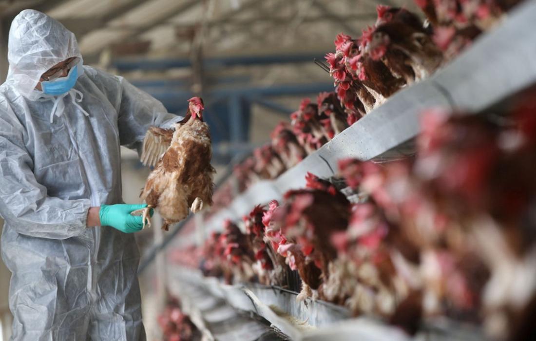 تسجيل إصابة بشرية بإنفلونزا الطيور في الصين