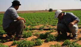 الشريف: ارتفاع نسبة ملوحة المياه الجوفية بغزة دفعنا لتدخلات لخدمة الأراضي الزراعية