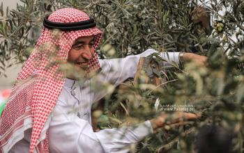 """بالصور:وزارة الزراعة تفتتح موسم جني وعصر """"الزيتون"""" بغزة"""
